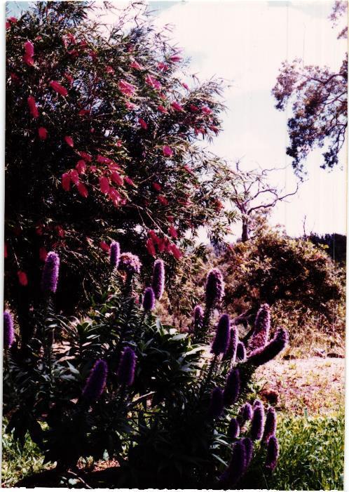 Obrázek 11: Jaro v buši
