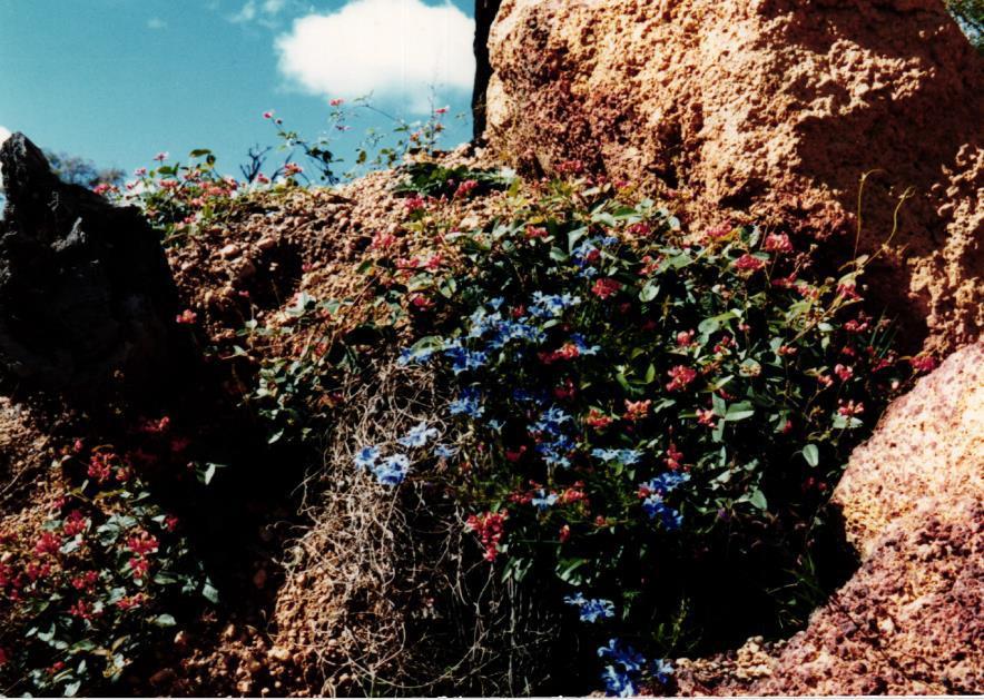 Obrázek 12: Rostliny v buši