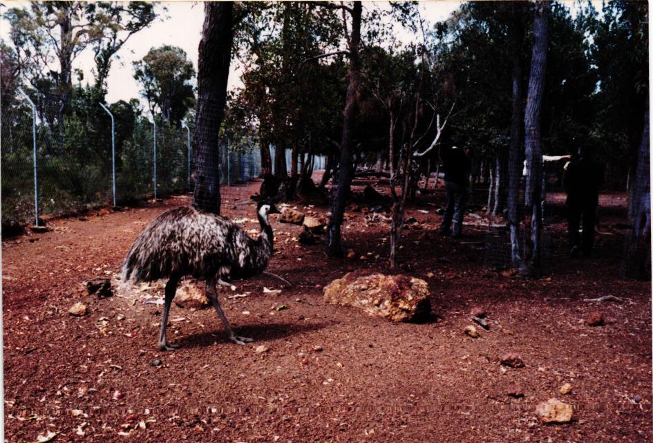 Obrázek 17: Emu v ZOO
